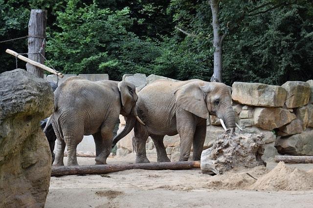 Top 10 dierentuinen in Nederland