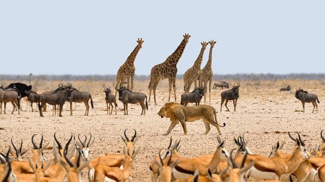 3 redenen waarom je Namibië moet bezoeken