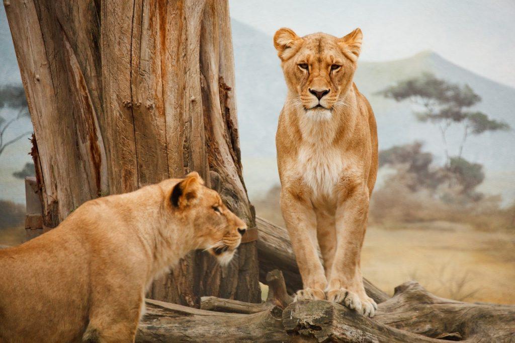De mooiste safariparken in Zuid-Afrika