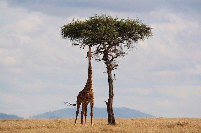 Safari in Afrika; dit zijn de 5 mooiste bestemmingen