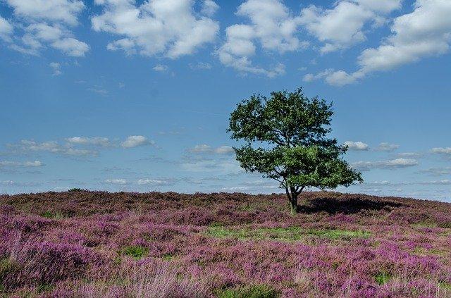 Top 10 mooiste natuurgebieden in Nederland